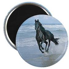 Black Arabian Horse-Beach Magnet