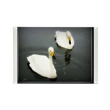 Black Water White Swans Rectangle Magnet