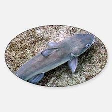 Catfish Decal