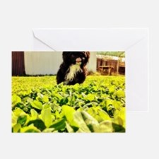 Roo Ze' Dog. Greeting Card