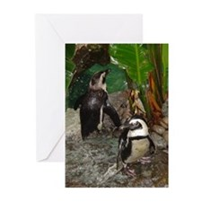 black-footed penguins Greeting Cards (Pk of 10