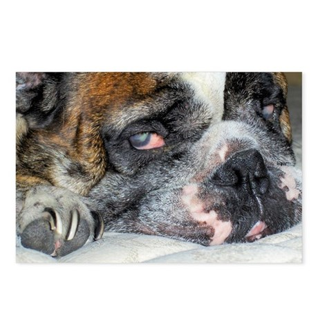 Tired Bulldog Postcards (Package of 8)