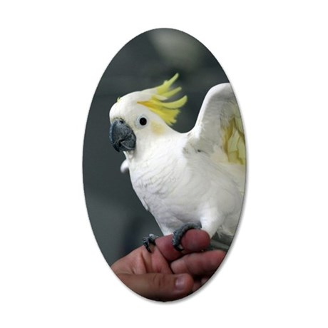 sulphur crested cockatoo 35x21 Oval Wall Decal