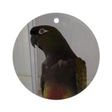 Patagonian Conure Round Ornament