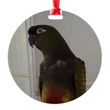 Patagonian Conure Ornament