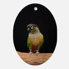 greencheek conure Oval Ornament
