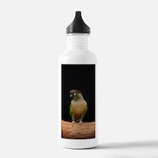 greencheek conure Water Bottle