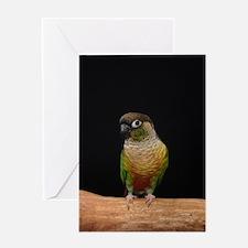 greencheek conure Greeting Card