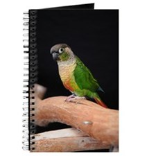 greencheek conure Journal