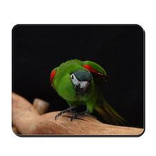 hahn's macaw Mousepad