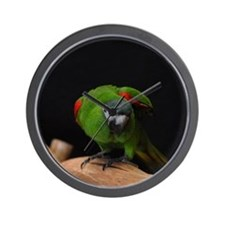 hahn's macaw Wall Clock