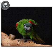 hahn's macaw Puzzle