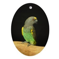 myers parrot Oval Ornament