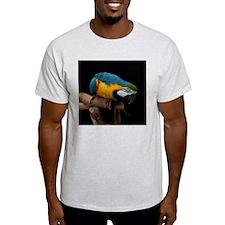 B&G Macaw T-Shirt