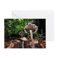 Old Man of the Forest Mushrooms Greeting Card