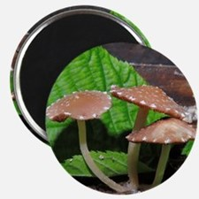 Spotted Brown Mushrooms Magnet