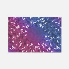 Little Swimmers - Blue/Pink Rectangle Magnet