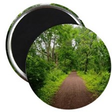 Trail in the Woods Magnet