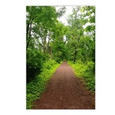 Trail in the Woods Postcards (Package of 8)