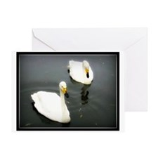 Black Water White Swans Greeting Card