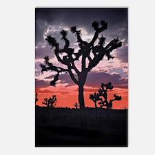 Joshua Tree Postcards (Package of 8)