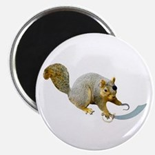 Pirate Squirrel Magnet