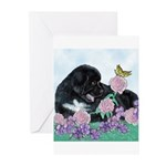 Newfoundland Puppy Greeting Cards (Pk of 10)