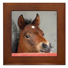 """""""Connemara Foal 1"""" Framed Tile"""