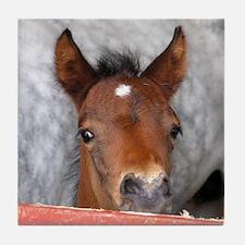 """""""Connemara Foal 2"""" Tile Coaster"""