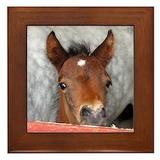 """""""Connemara Foal 2"""" Framed Tile"""