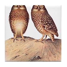 vintage owls Tile Coaster