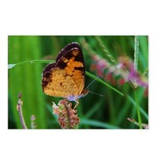 Perched Butterfly Postcards (Package of 8)