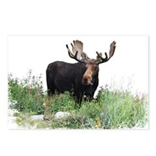 Moose Eating Flowers Postcards (Package of 8)