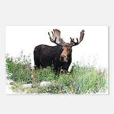 Moose Eating Flowers Postcards (Package of 8)