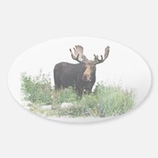 Moose Eating Flowers Decal