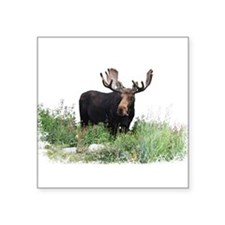 "Moose Eating Flowers Square Sticker 3"" x 3"""