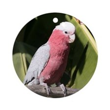 Rose Breasted Cockatoo Round Ornament