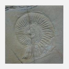 Shell Fossil Art Tile Coaster