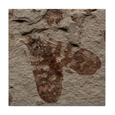 Scorpionfly Moth Fossil Insect Art Tile Coaster
