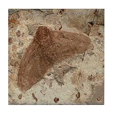 Moth Fossil Stone Art Tile Coaster