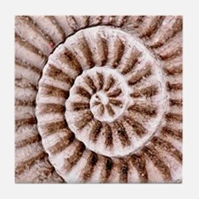 Shell Fossil 4 Ceramic Art Tile Coaster