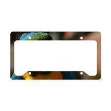 Macaw License Plate Holder