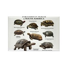 Tortoises of North & South America Rectangle Magne