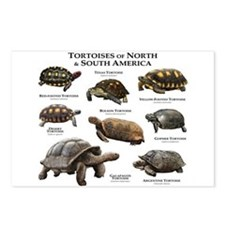 Tortoises of North & South America Postcards (Pack