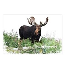 New Hampshire Moose Postcards (Package of 8)