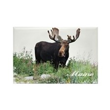 Maine Moose Rectangle Magnet
