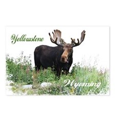 Yellowstone WY Moose Postcards (Package of 8)