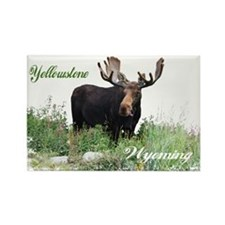 Yellowstone WY Moose Rectangle Magnet (10 pack)