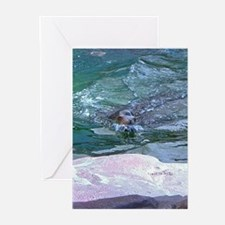 sea lion in water Greeting Cards (Pk of 10)