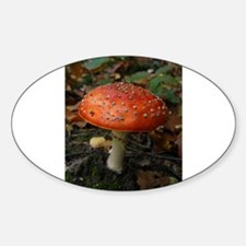 Red Toadstool Photo Decal
